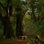 Die Seele erwandern und in den Wäldern baden …