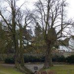 Alte Quellen und Klöster: Entdeckungen in Lamspringe und Bad Gandersheim