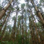 Waldbaden, Kräuterwandern und Transformationserfahrungen bietet der Feensteig!